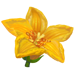 Fiore Cuore Galleggiante