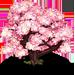 Albero Sakura