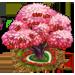 Albero di Ciliegie Zuccherose
