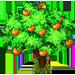 Albero di Mandarini
