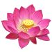 Fiore di Loto Indiano