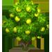 Albero Guava