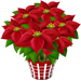 Albero Stella di Natale