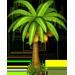 Albero di cocco