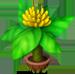 Mini Banano