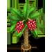 Palma da Datteri