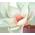 Magnolia Bianca giapponese