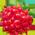 Salmonberry Americano